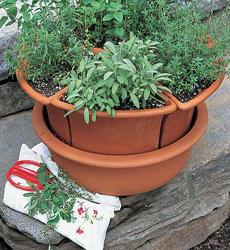 whiteflowerfarm-mixed-herbs-230